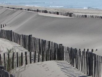 Ganivelles utilisées pour stabiliser une dune