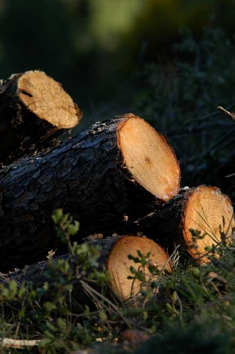 Sylviculture et travaux forestiers