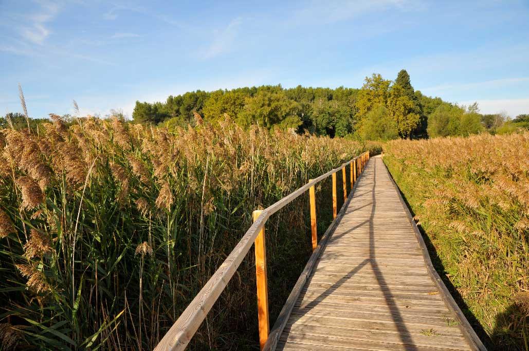 Cheminement en bois sur une roselière, étang salé de Courthézon