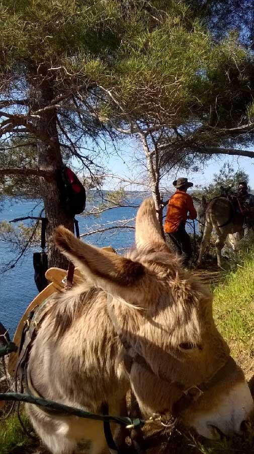 Acheminement du matériel à dos d'ânes