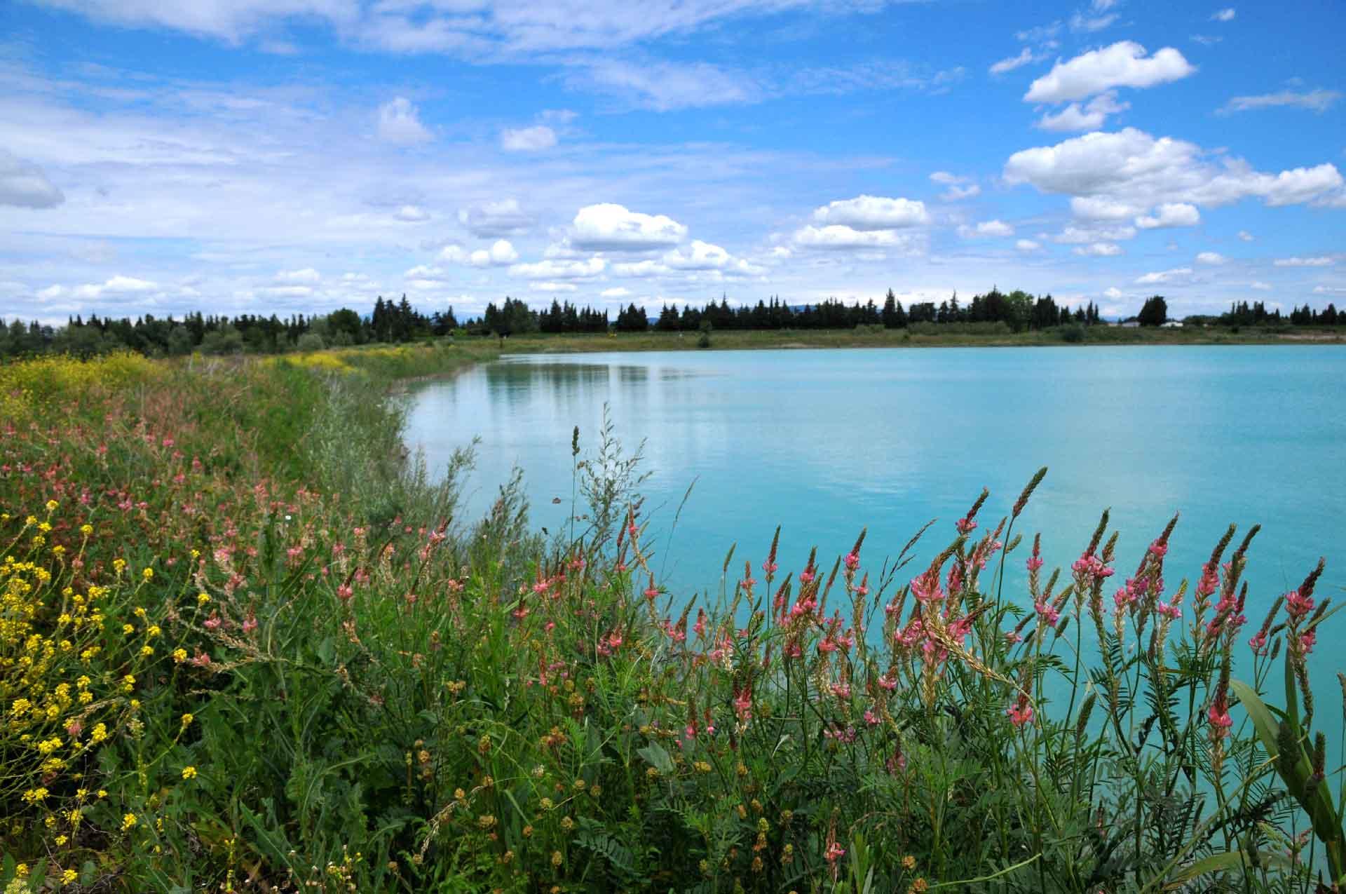 Génie végétal : Renaturalisation des berges - Résultat du chantier de Confortement d'une digue - Carrière Lafarge à Cavaillon