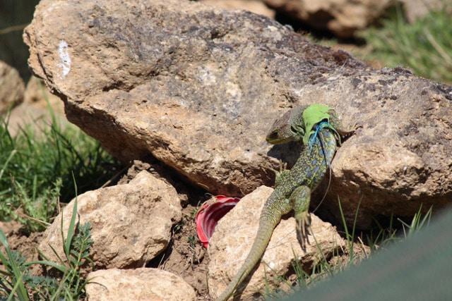 Travaux de génie écologique pour la faune
