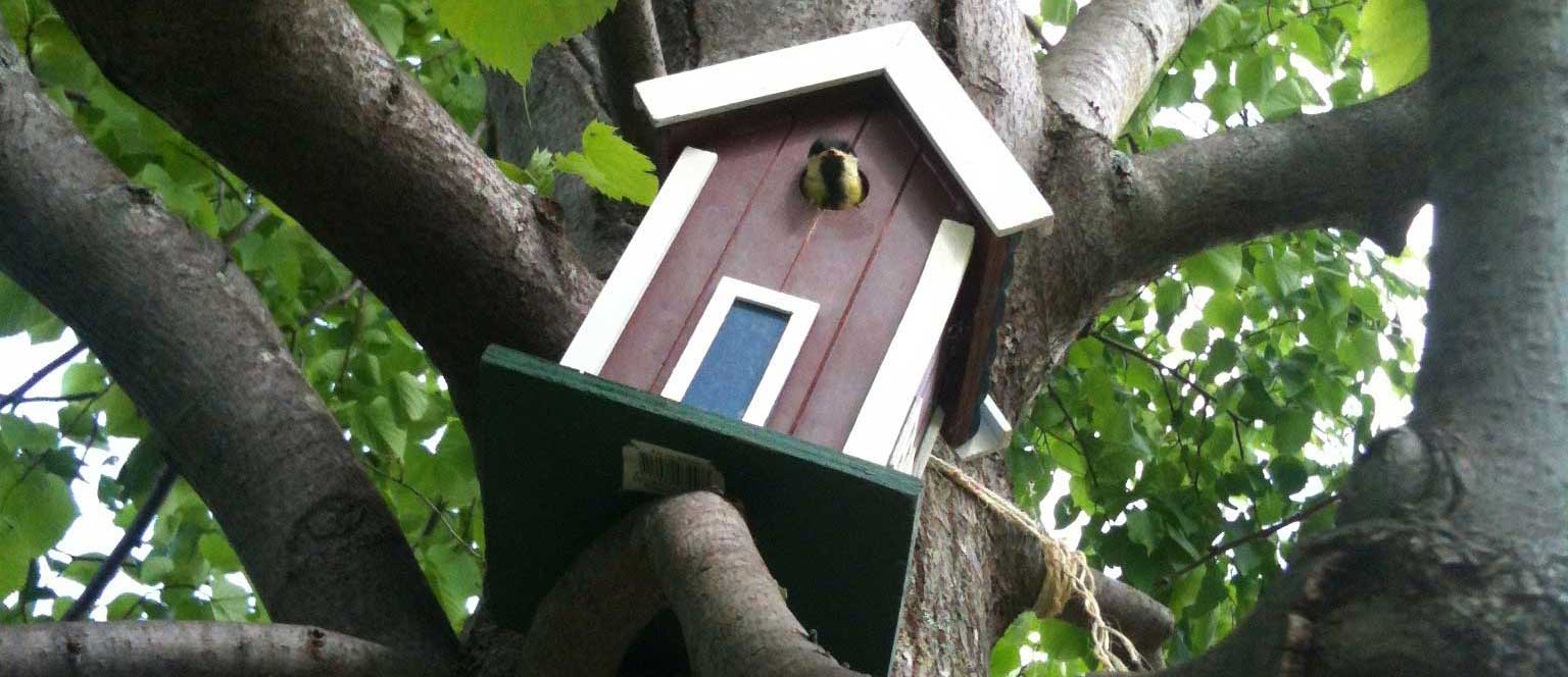 Génie écologique : nichoir pour mésange