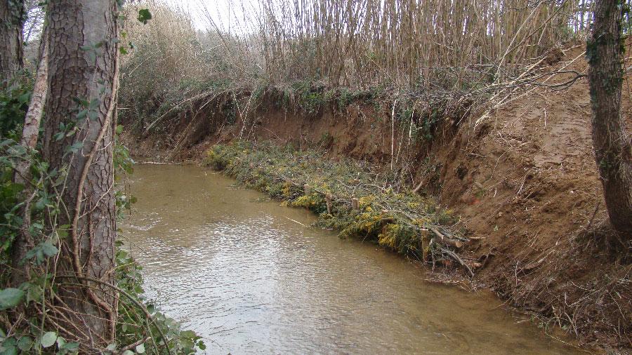 Génie végétal : peigne sur la berge du Bourrian, golfe de Saint-Tropez