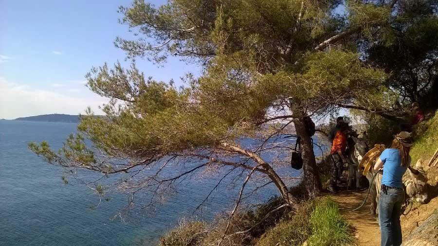 Accès au chantier en ânes sur le sentier du littoral de St-Tropez