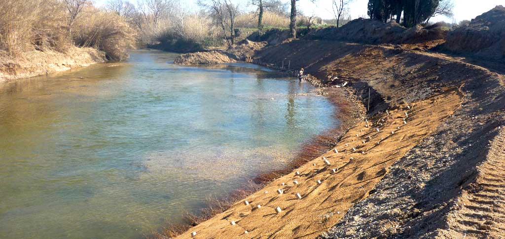 Génie végétal : couches de branches à rejet sur berge du cours d'eau de l'Arc - La Cauvette