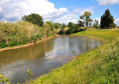 Travaux de génie végétal – Restauration d'une berge : cours de l'Arc « La Cauvette » – Berre l'Etang (Bouches-du-Rhône,13)