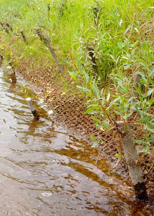 Lits de plants et plançons sur géotextiles coco