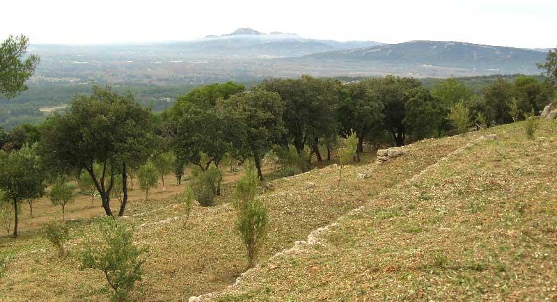Terrain pourvue de restanques après débroussaillement aux Roques
