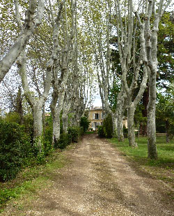 Elagage d'arbres d'alignement platanes