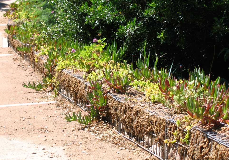 Génie minéral : muret de gabions végétalisés