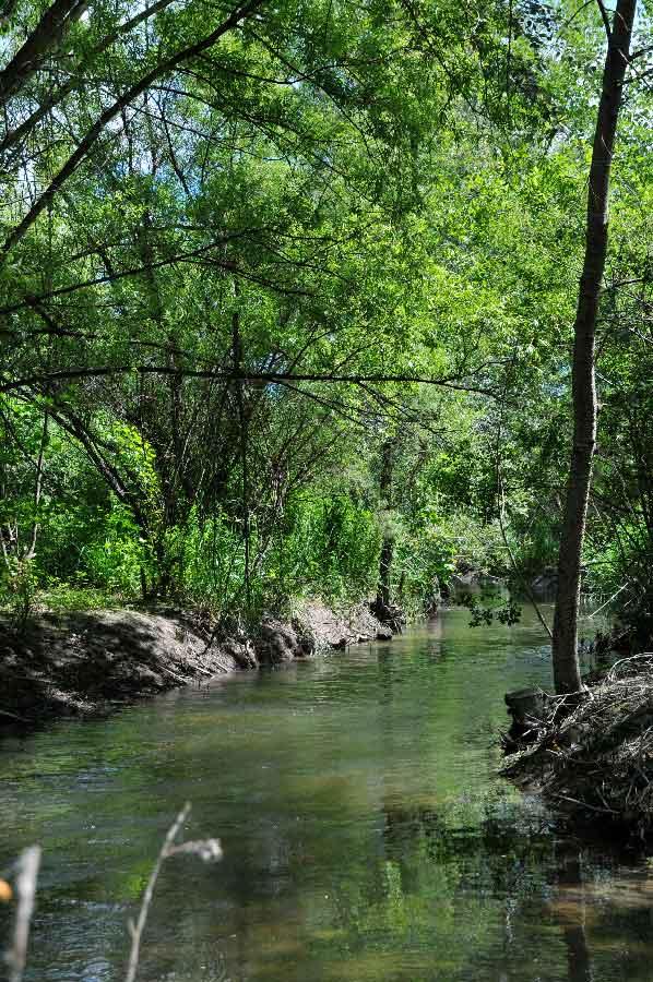 Protection et entretien de ripisylves sur nos rivières