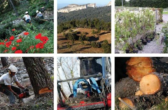 Sylviculture et protection des forêts contre les incendies