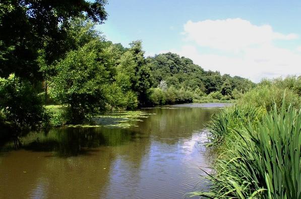 Protection et entretien des rivières et des ripisylves