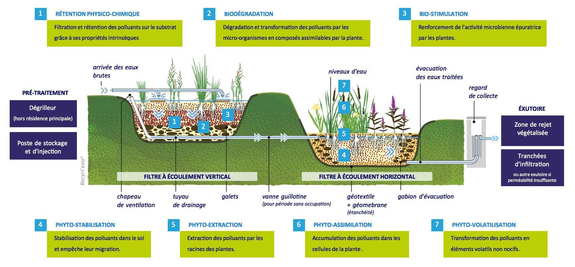 Fonctionnement de la phytoépuration