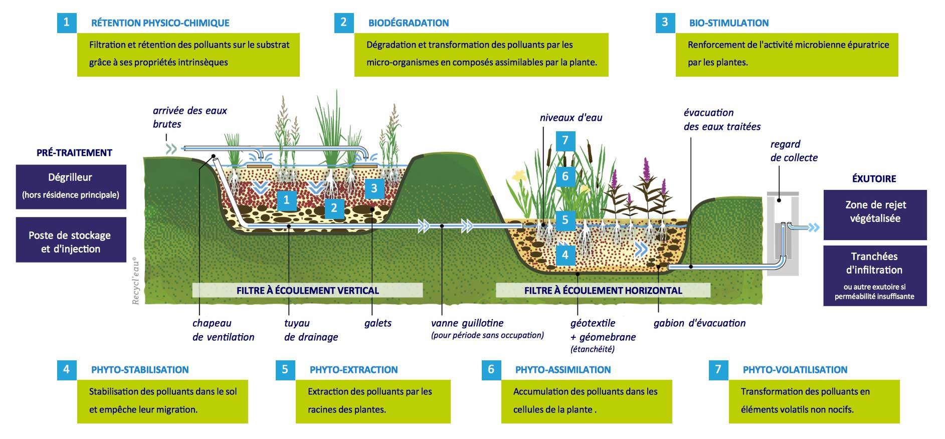 Principe de la phytoépuration
