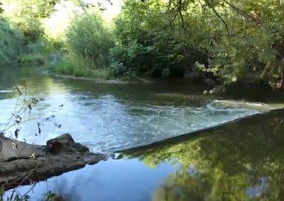 Génie écologique et végétal – continuité écologique, suppression d'un seuil : sauvegarde de l'anguille. L'Arc – Velaux (Bouches-du-Rhône,13)