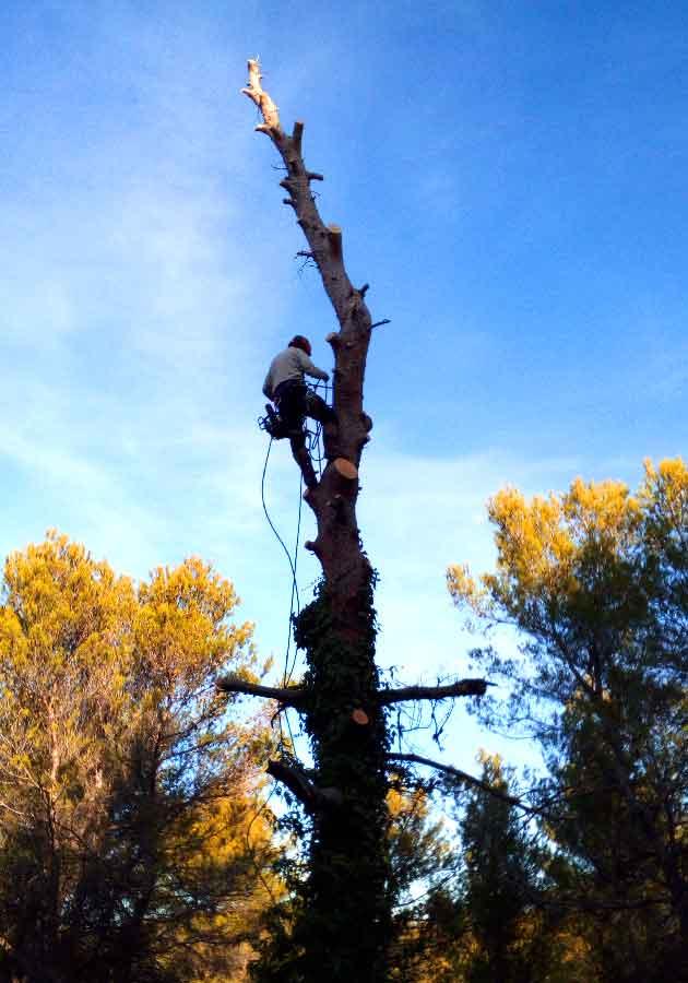 Démontage d'un arbre