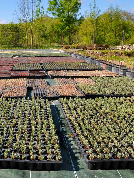Plantes halophytes mise en culture