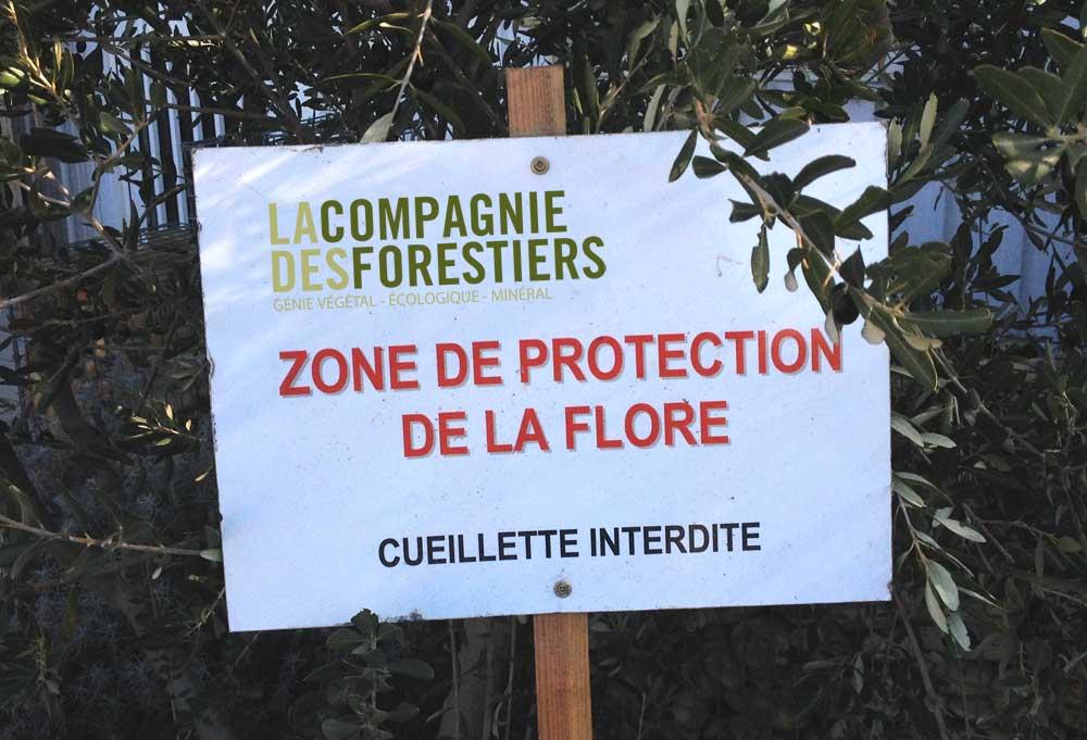 Mesures compensatoires - Zone de protection de la flore
