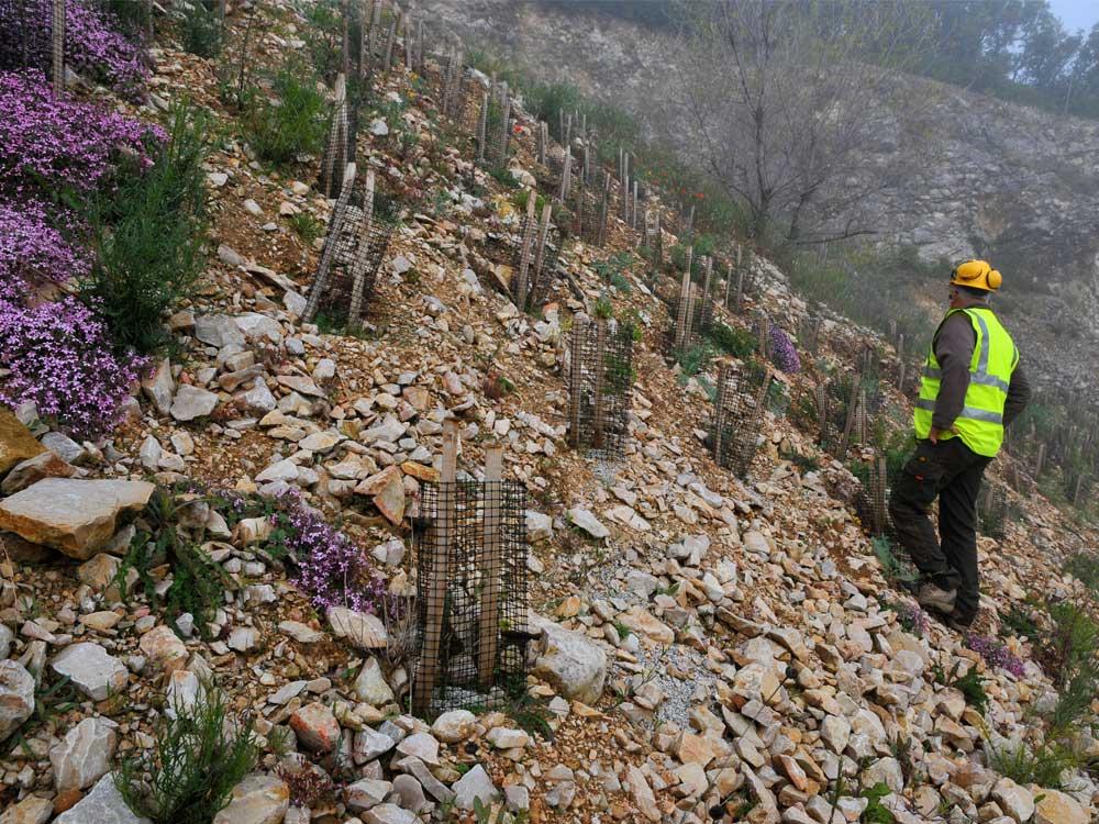 Réhabilitation de carrière - Plantation de plants forestiers avec amendement de sol et protection anti-gibier