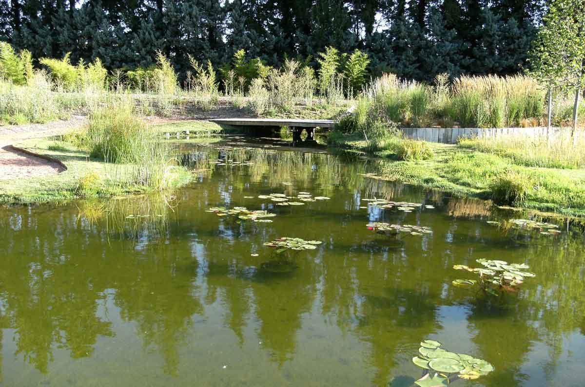 Passerelle sur un bassin naturel