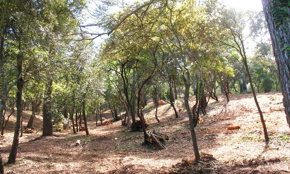 Débroussaillement forestier