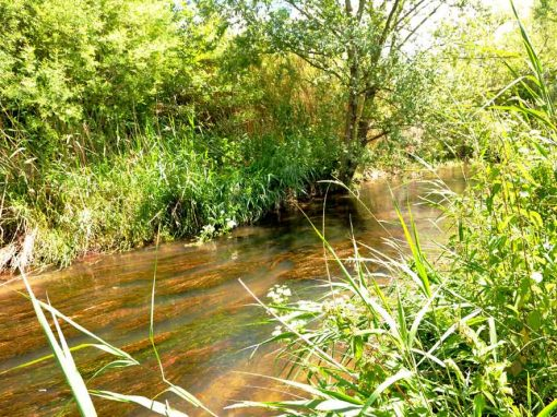 Génie écologique – Restauration d'un cours d'eau : Le Vistre (Gard, 30) – Retour d'expérience : 15 ans après !
