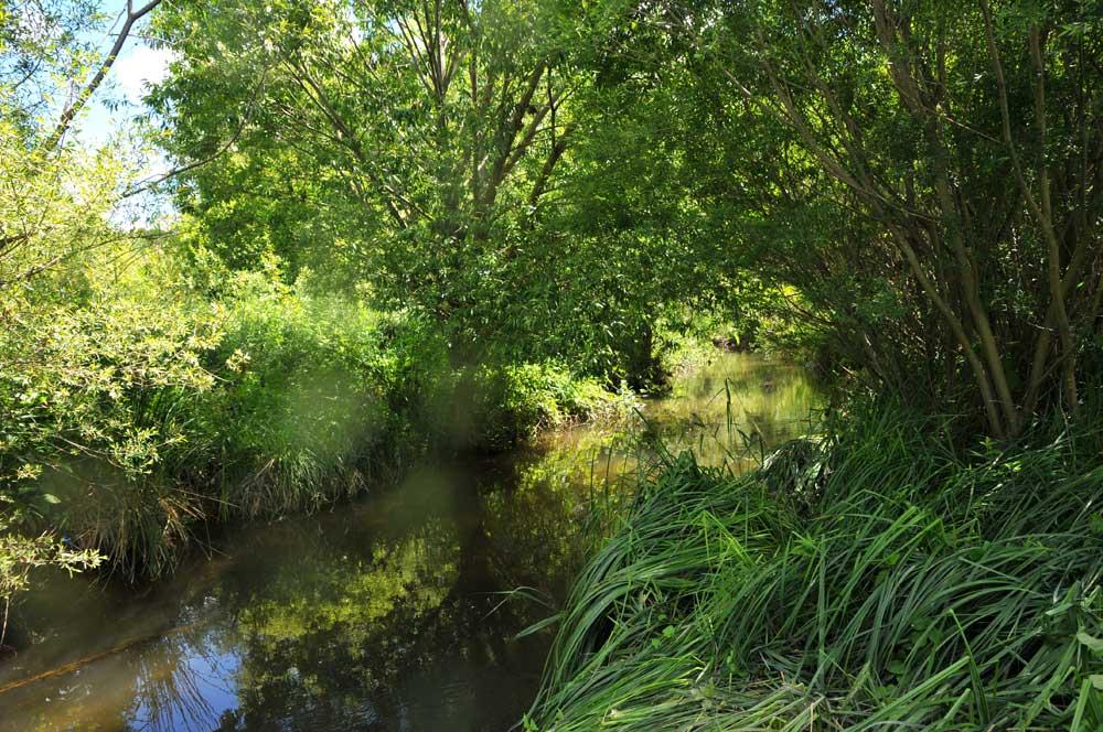 Entretien de rivière