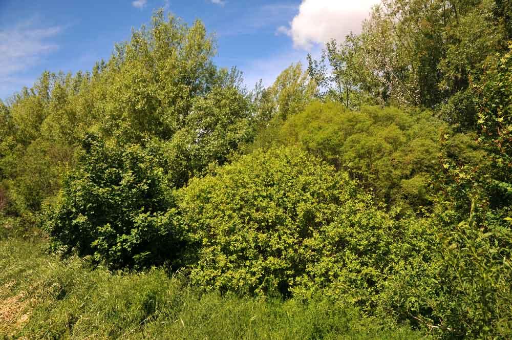 Arbres et arbustes plantés sur les talus au dessus du cours d'eau