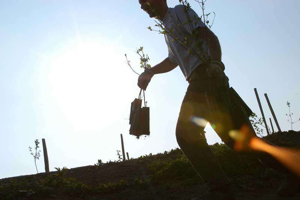 Génie végétal, plantation des arbustes