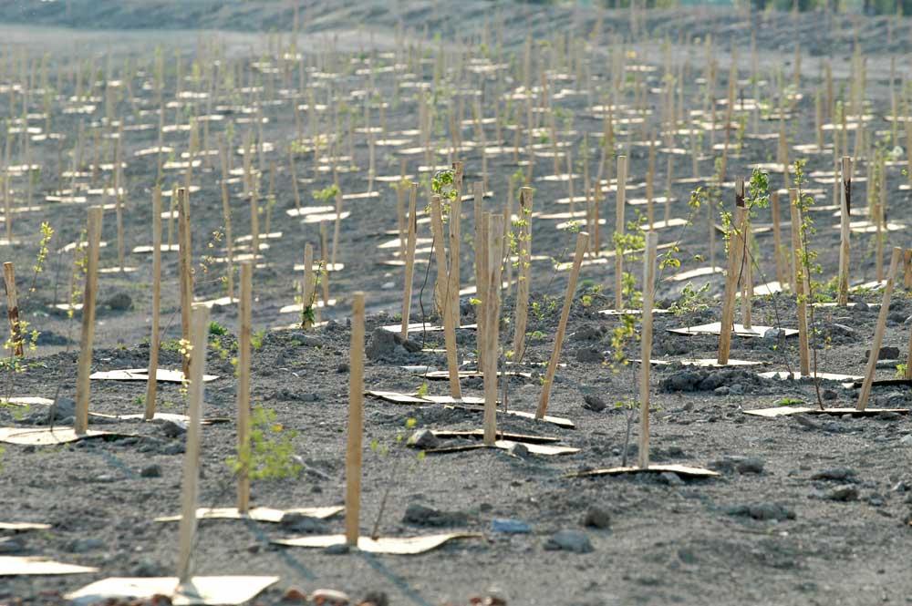 Génie végétal, restauration d'un cours d'eau, plantation