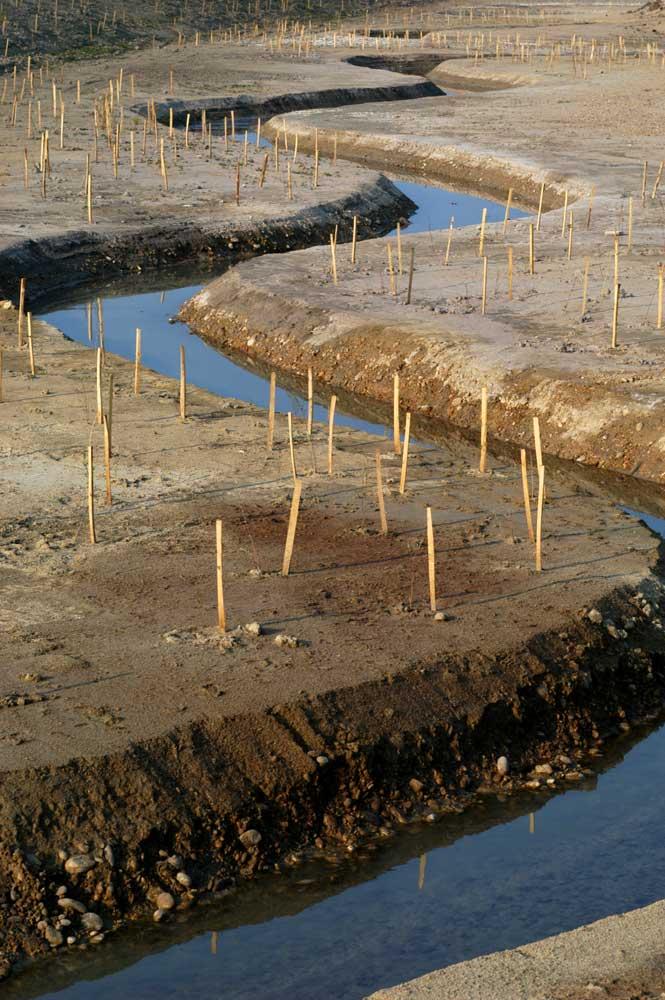 Restauration de cours d'eau. Reméandrage et génie végétal