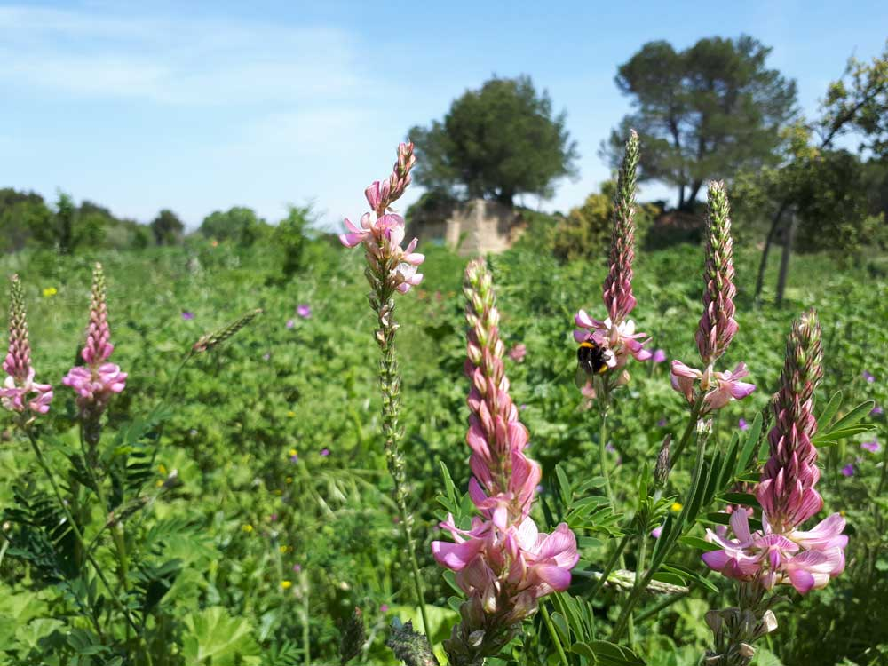 Fauchage tardif : Arboretum du mas de Badon, Eygalières