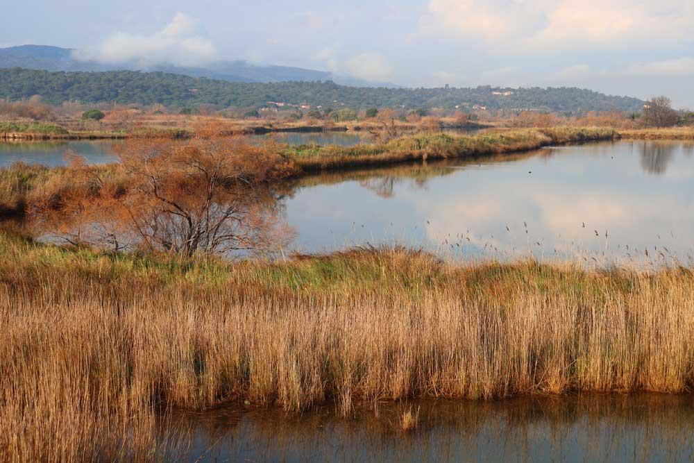 Vue de la lagune des étangs de Villepey à Fréjus