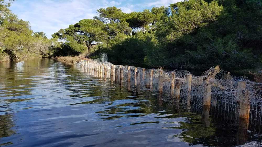 Génie écologique : fascines de coquilles d'huitres