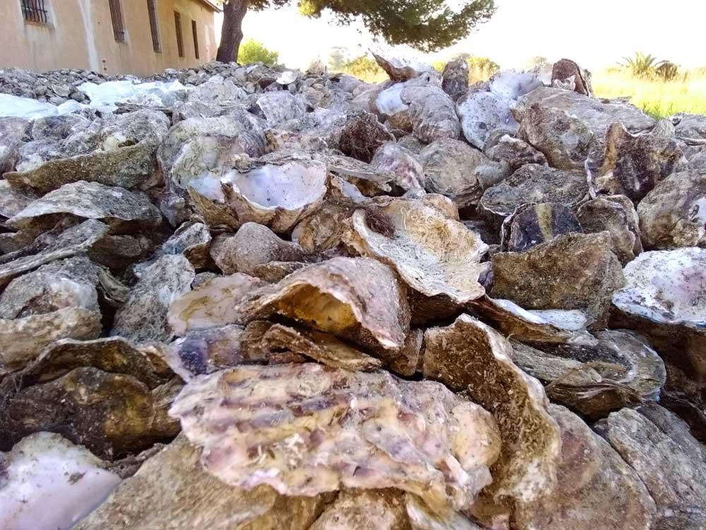 Génie écologique : 19 tonnes de coquilles d'huîtres utilisées
