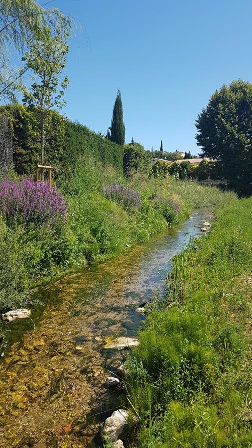 Génie végétal - Restauration de berges - Hélophytes - Huveaune - Bouches du Rhône
