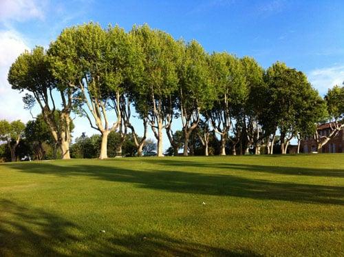 Elagage en taille douce d'arbres d'alignement