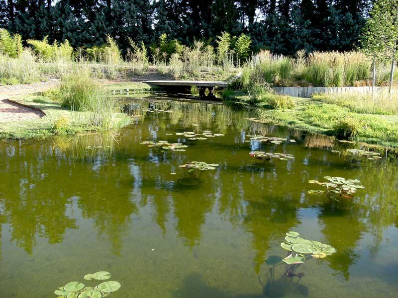 Bassin d'agrément avec filtration naturelle