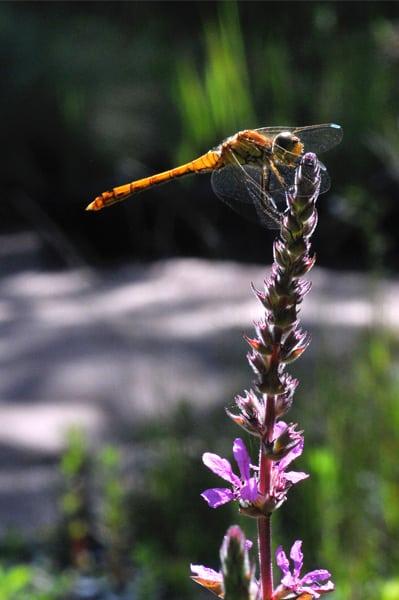 La phytoépuration une solution écologique d'avenir