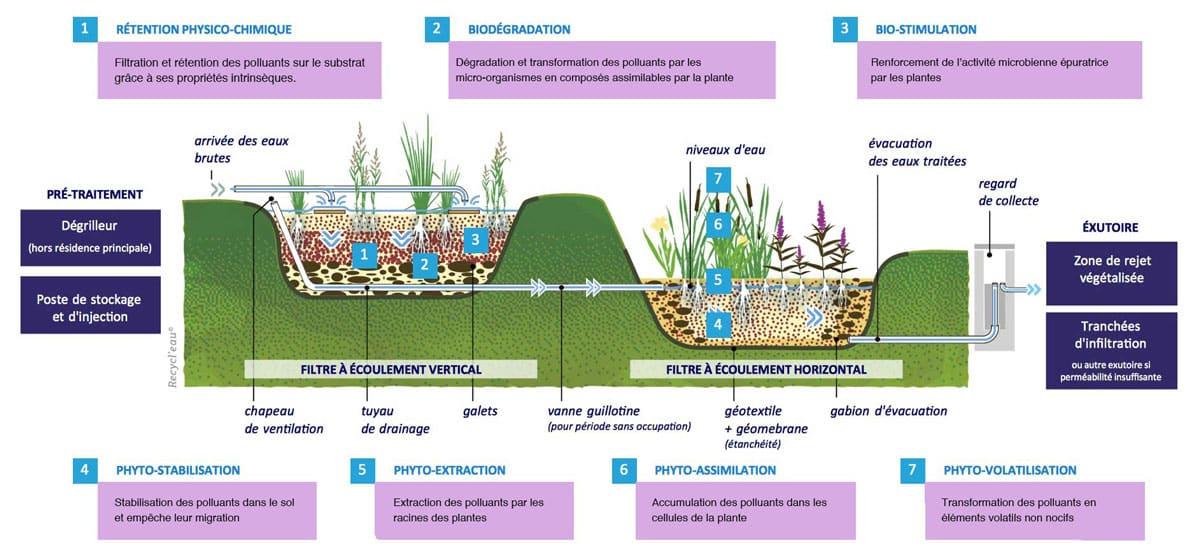 Principe de fonctionnement de la phytoépuration - ©BlueSet