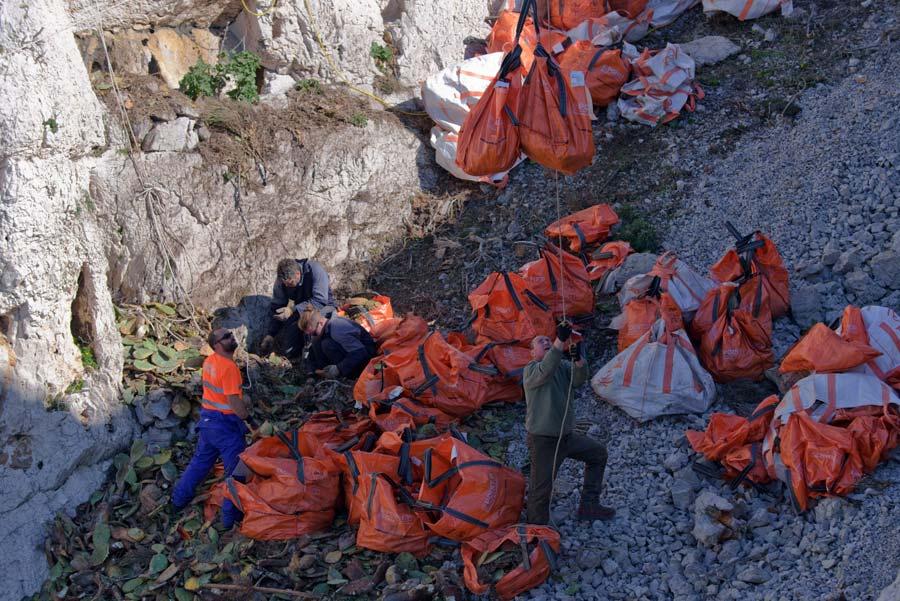 Parc des calanques, île Jarre : une tyrolienne pour évacuer les figuiers de Barbarie