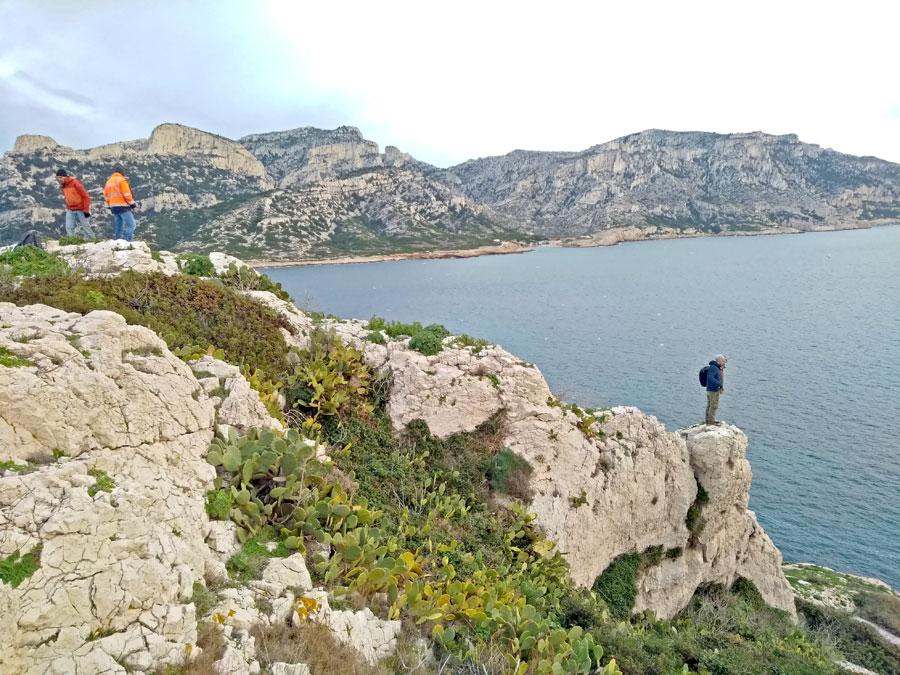 Ile Jarre - Archipel du Riou - les figuiers sur la falaise