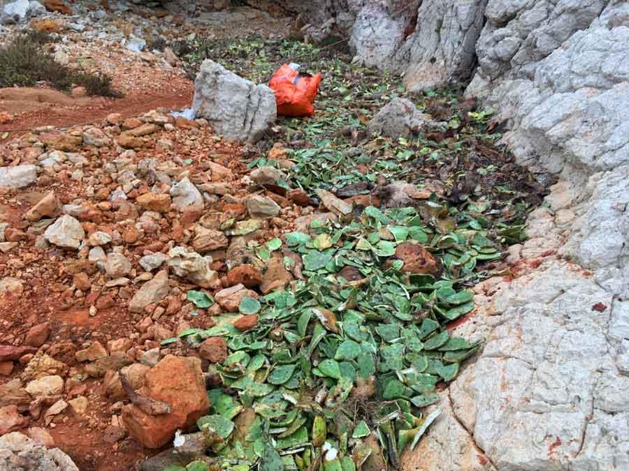 Génie écologique, Ile jarre : les figuiers sont stockés sur une zone protégée