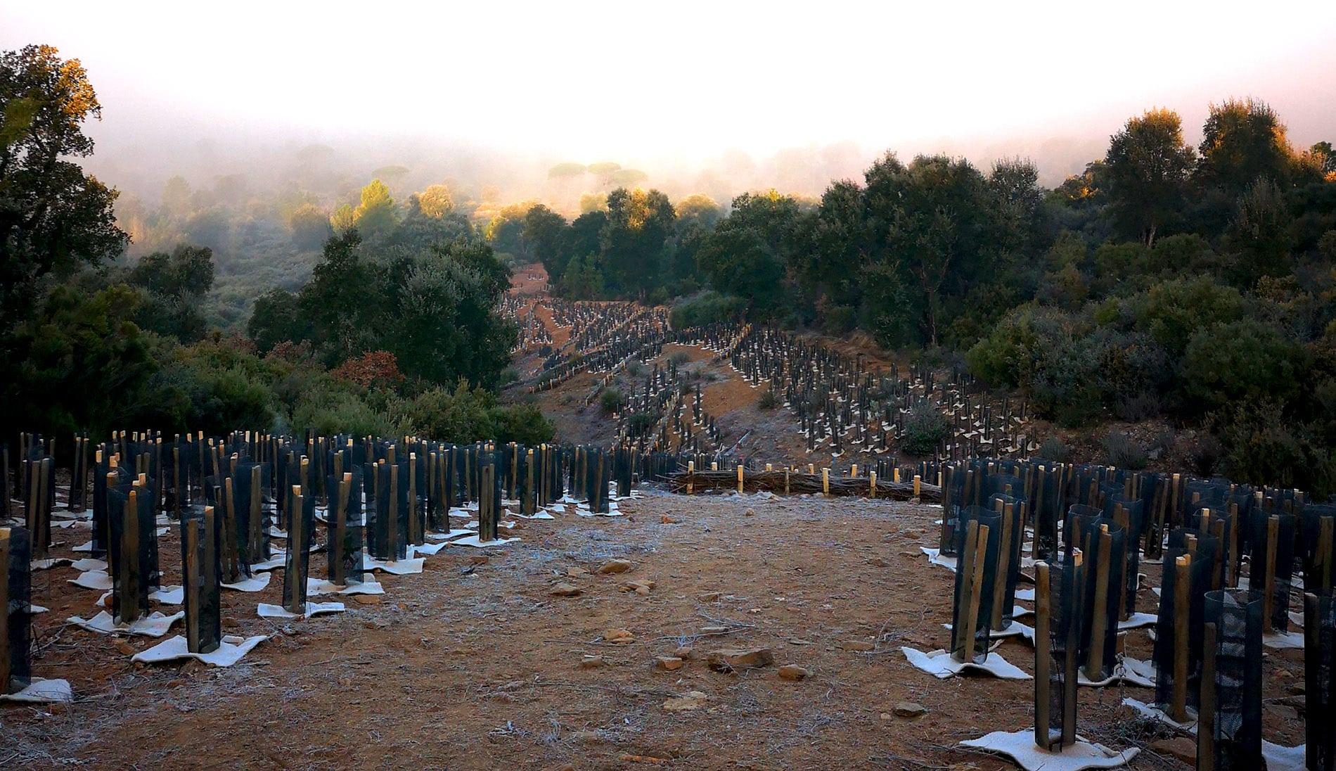 Compensation Carbone Plantation