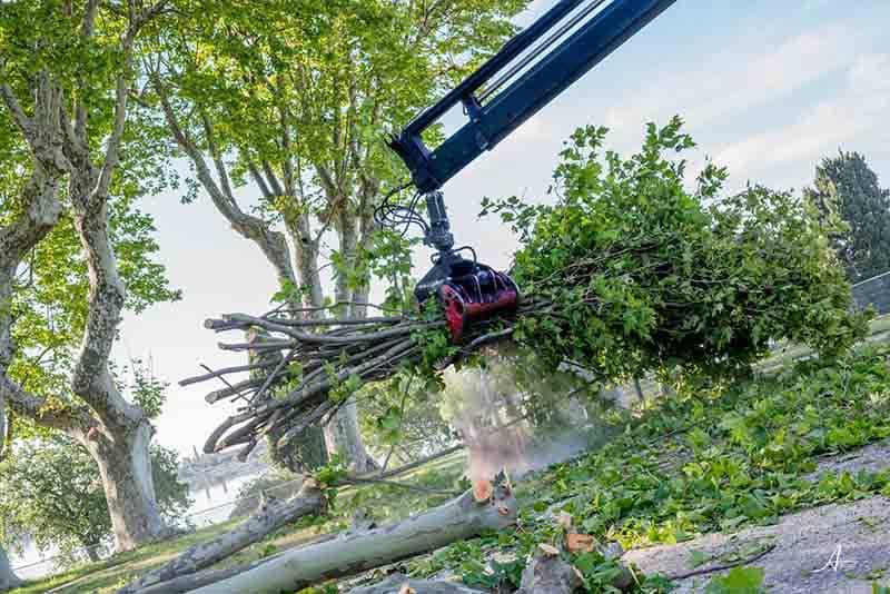 Abattage arbres Bouches-du-Rhône