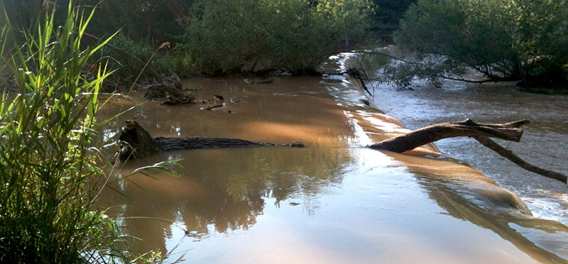Tronc d'arbre tombé dans une rivière