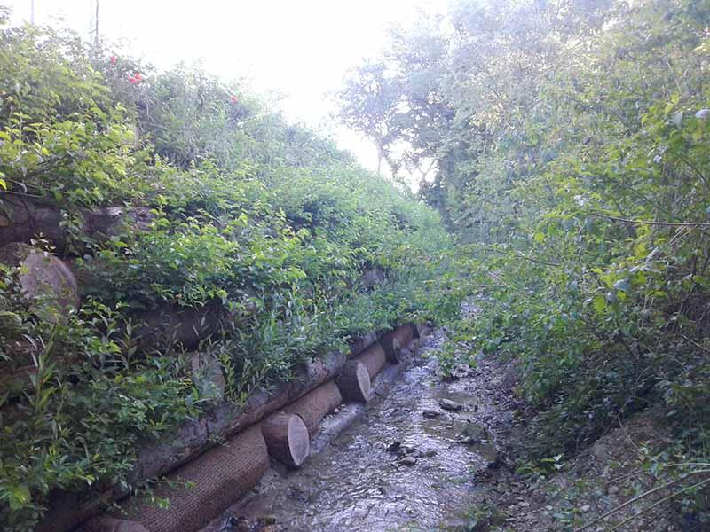 caissons végétalisés dans un cours d'eau
