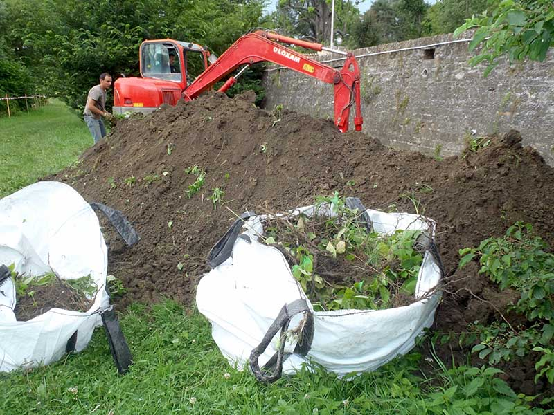Lutte contre les plantes invasives - La Renouée